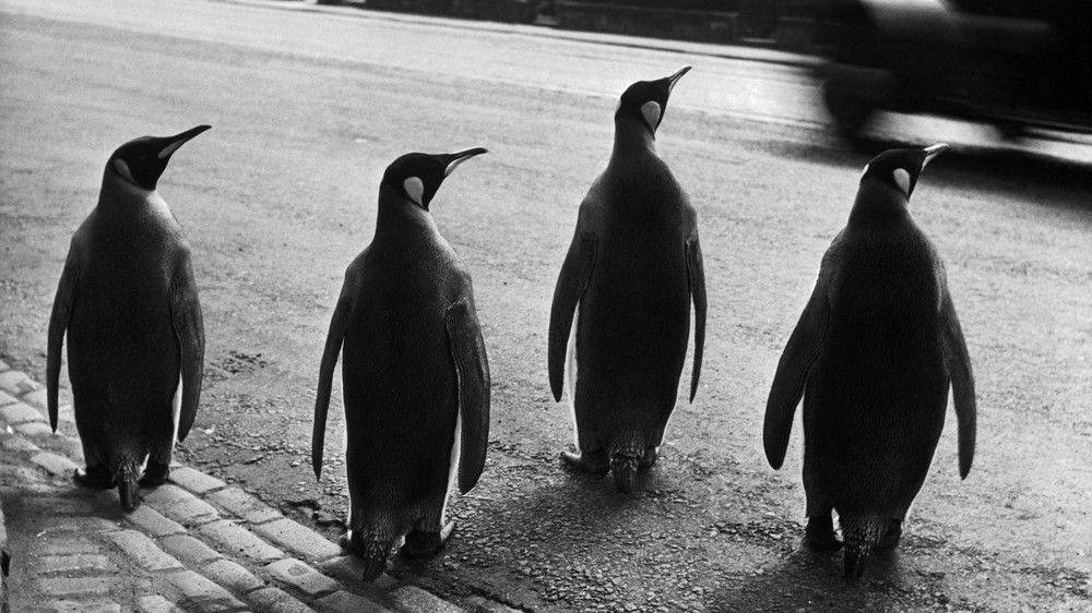 Penguins in Edinburgh