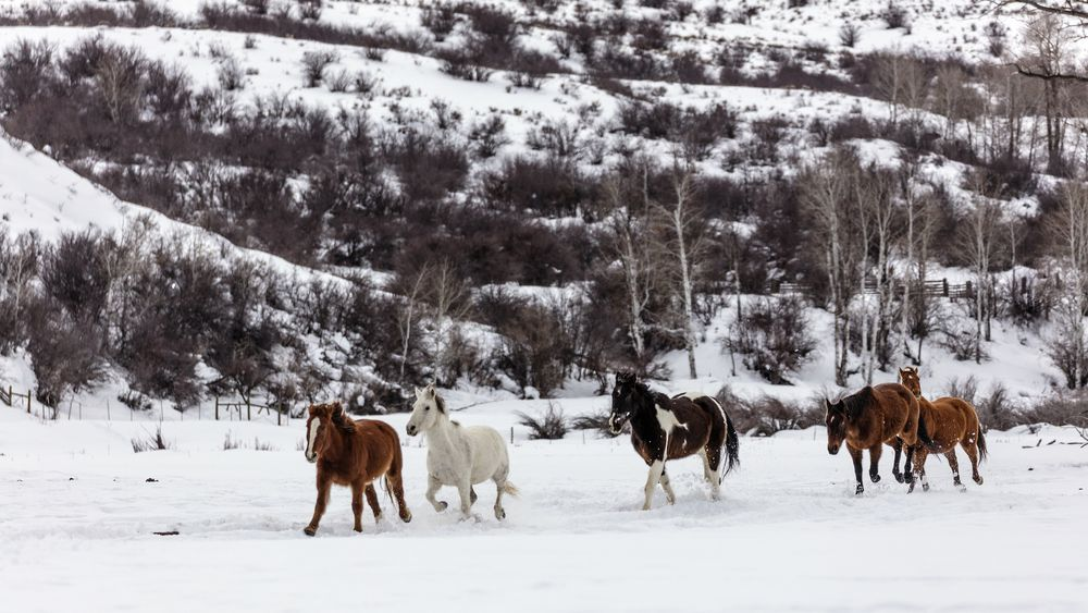 A mixed herd of wild and domesticated horses