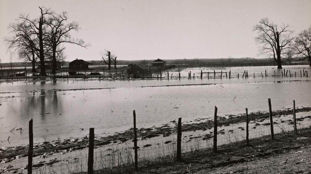 Submerged Farmland near Tiptonville, Tennessee