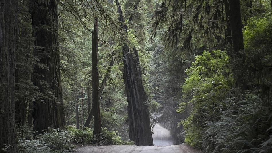 Jedidiah Smith Redwood State Park, CA