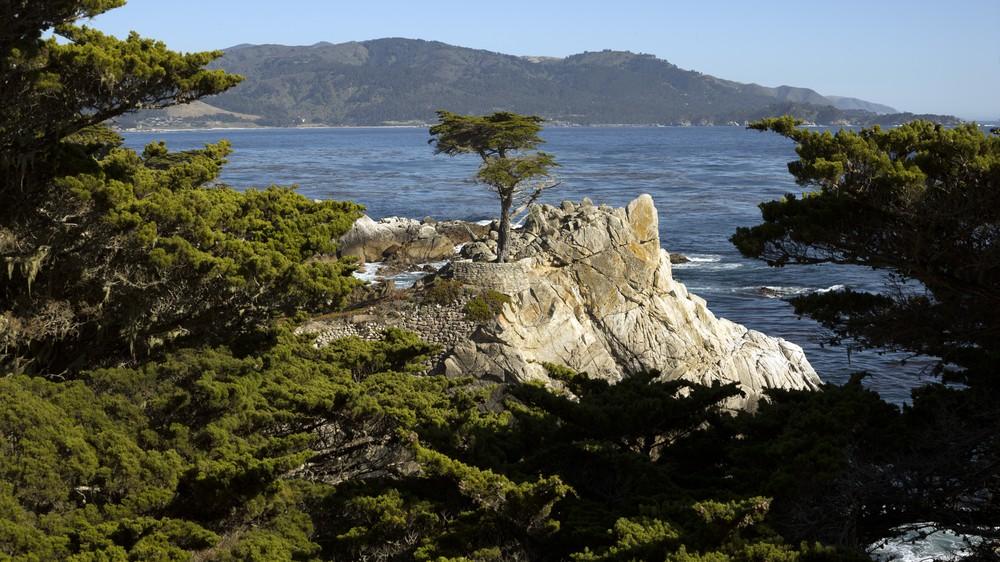 California Lone Cypress