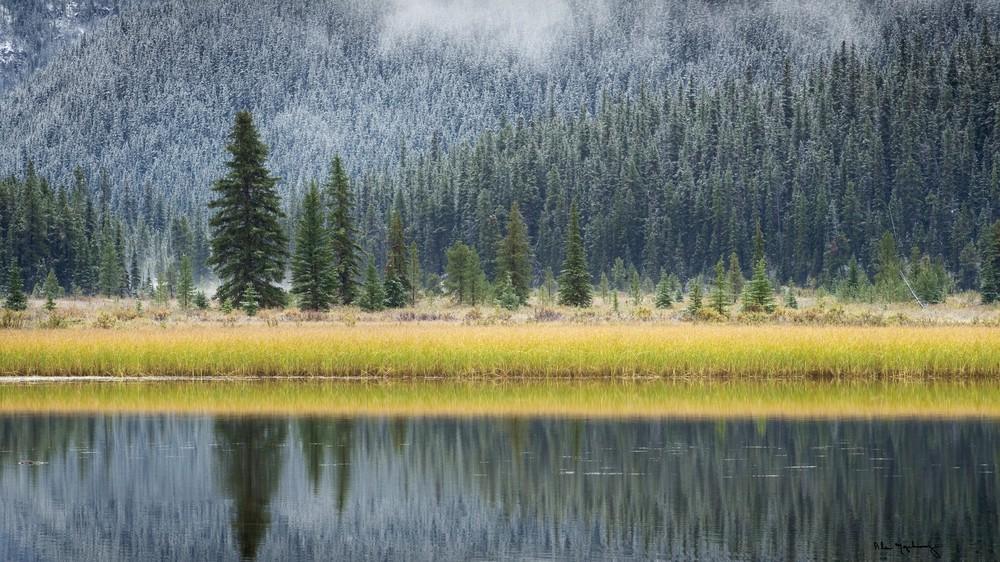 Waterfowl Lake II