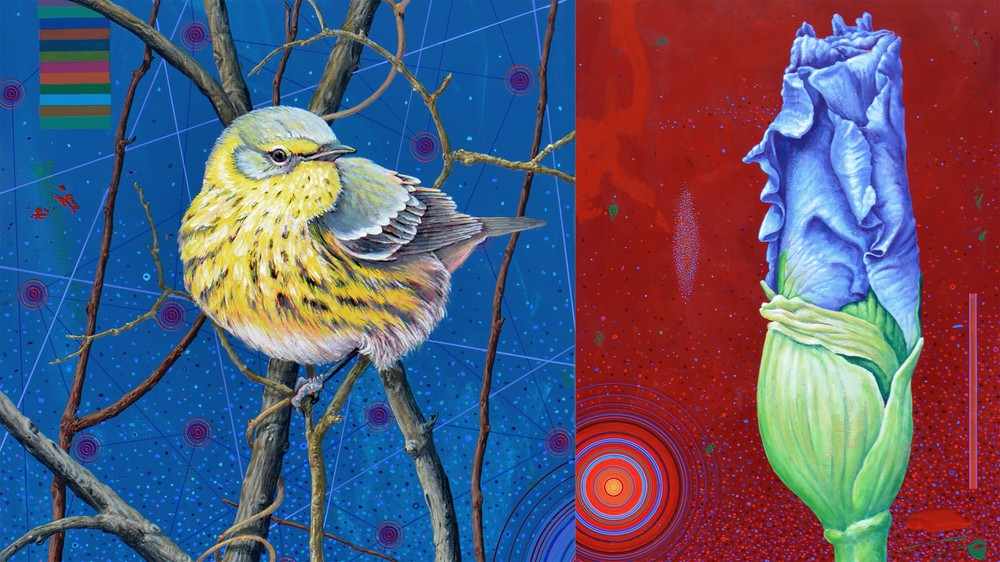 Cape May Warbler and Iris