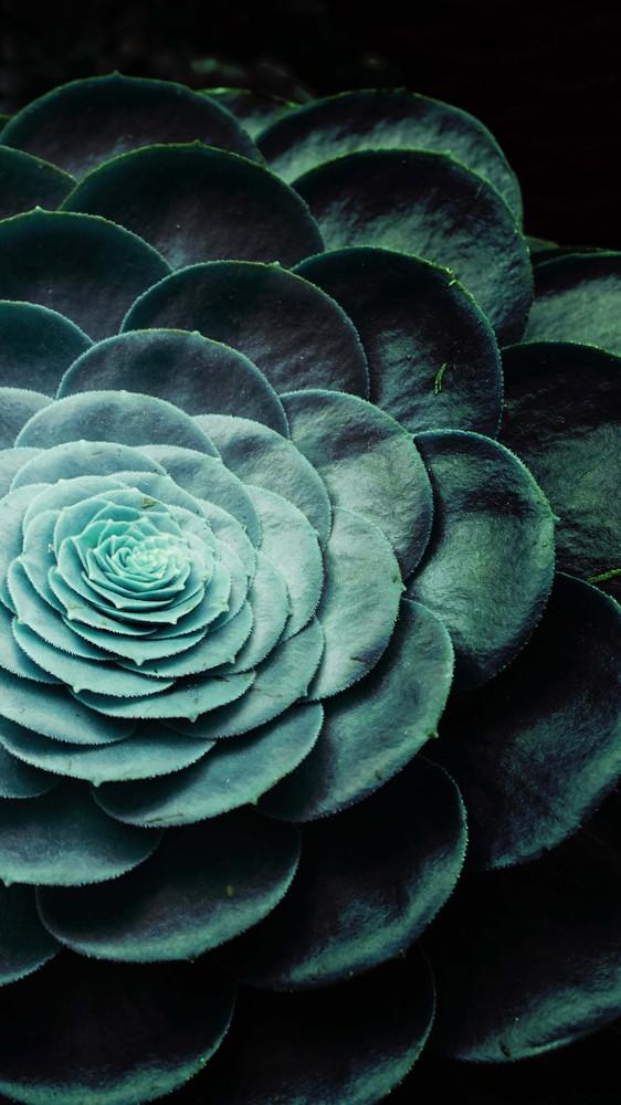 Darkside of Succulents