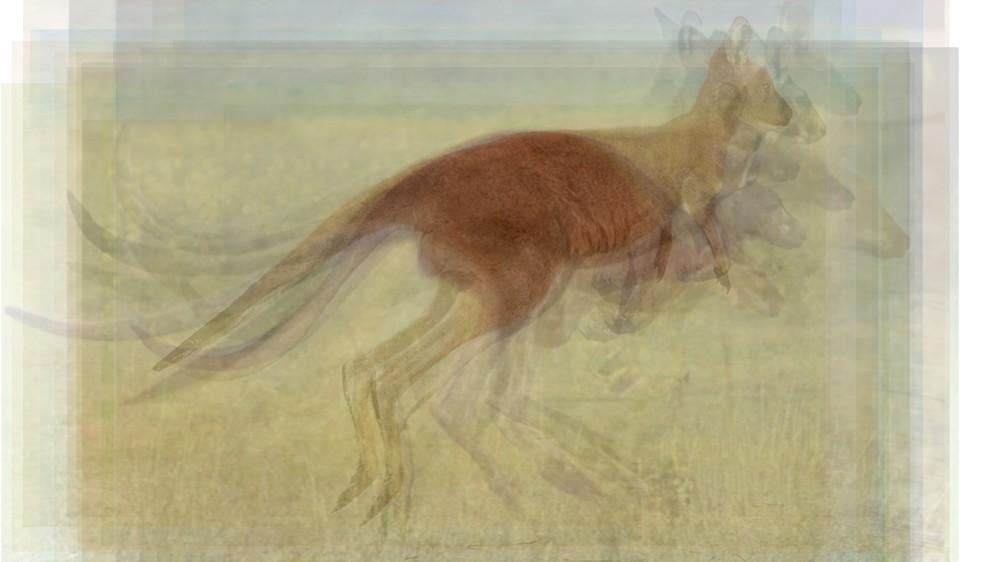 Kangaroo Hop Overlay