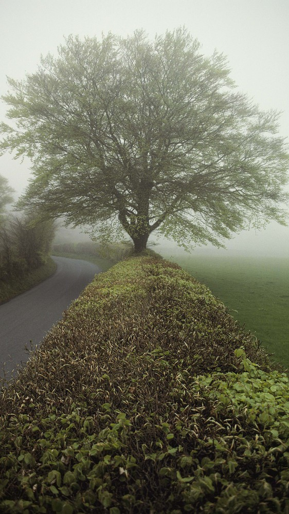 Exmoor, Somerset, England
