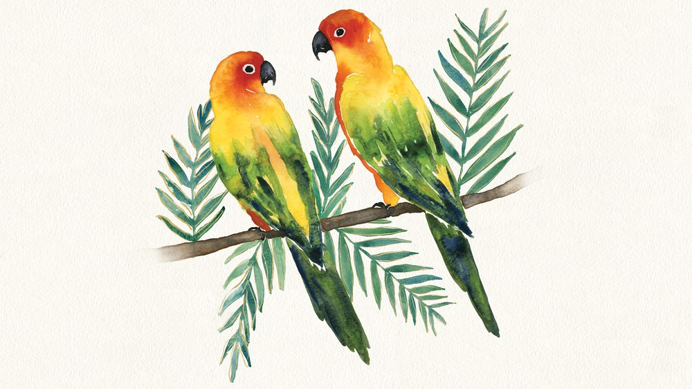 Tropical Fun Birds