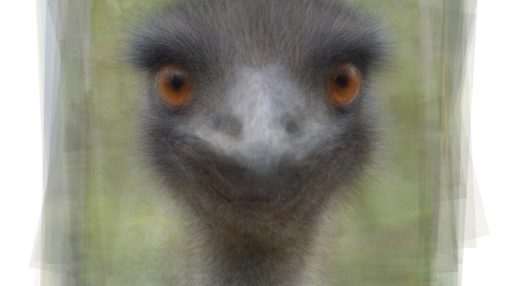 Emu Portrait Overlay