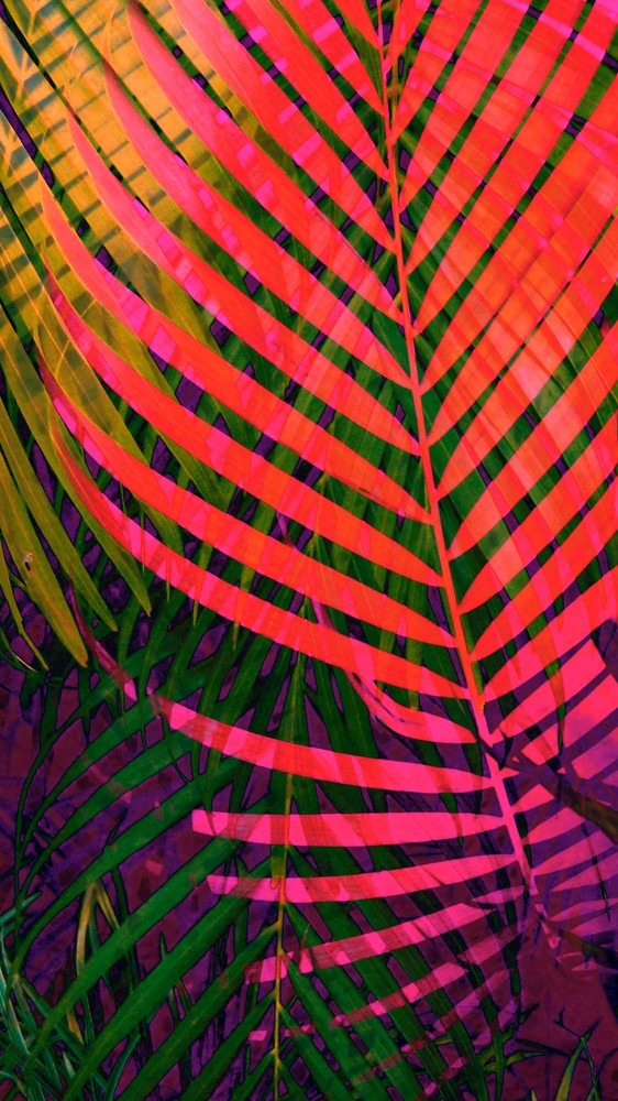 Colorful Tropic Leaves no6