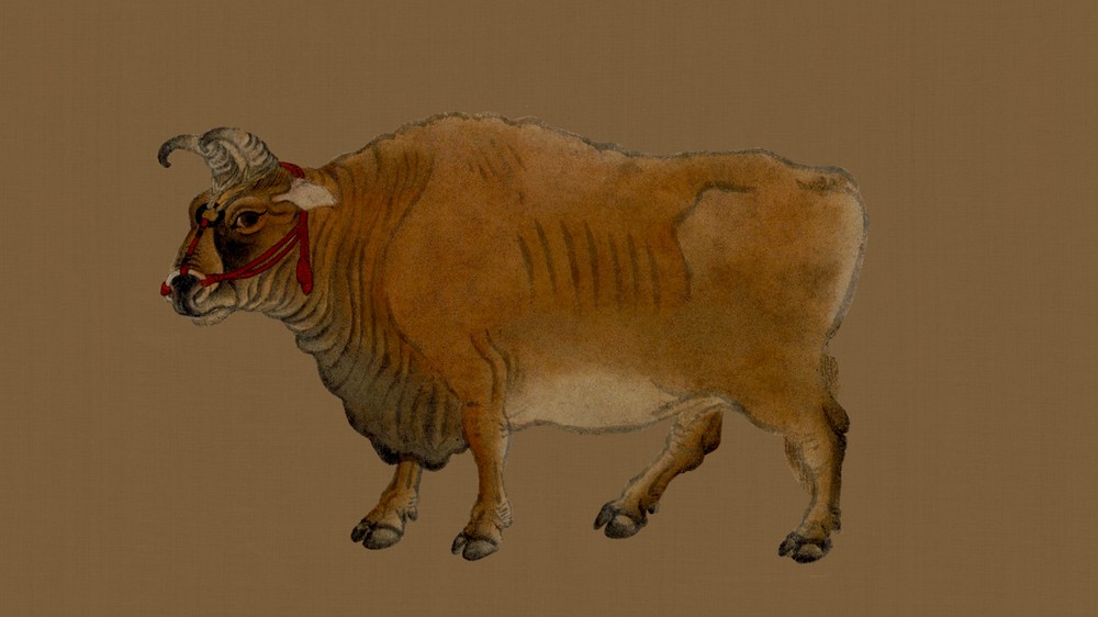 Five Oxen (detail)